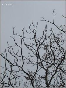 Matilda Bay_trees_2