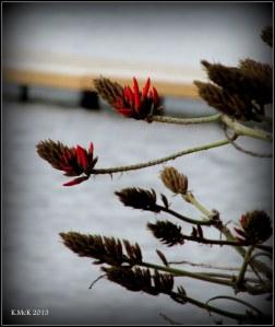 Matilda Bay_trees_4