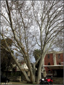 Matilda Bay_trees_6