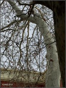 Matilda Bay_trees_9