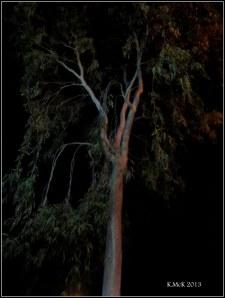 street tree_2