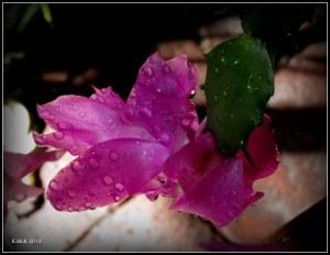 water drops_4