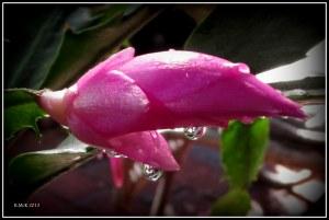 water drops_7