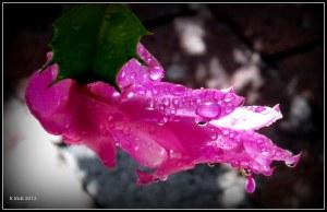 water drops_9