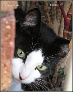 a cat named Charlie