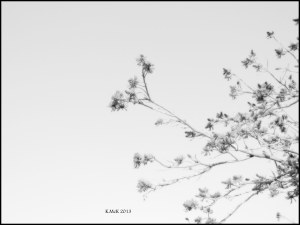 black and white_14