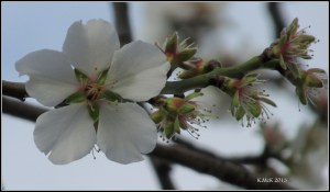 blossom_2