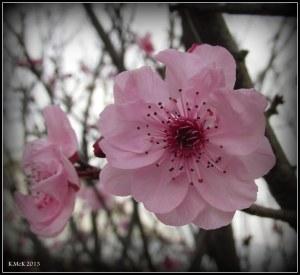 blossom_3