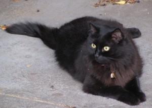 pretty fattee cattee_11Feb2012