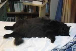 sprawled on mah bed