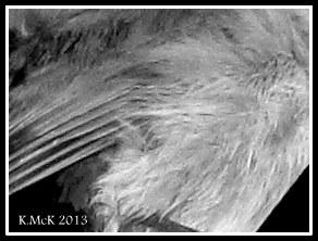 textures_11