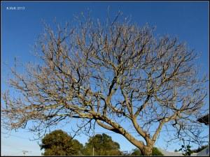 tree_11