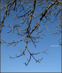 tree_12