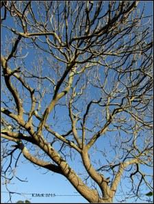 tree_14
