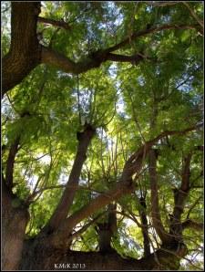tree_4
