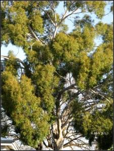 tree_6