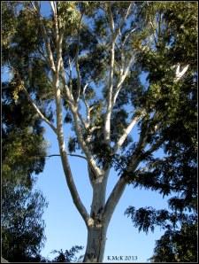 tree_7