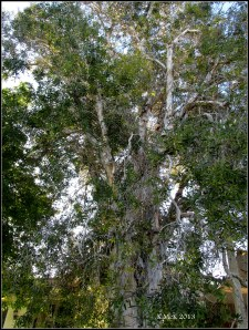 tree_8