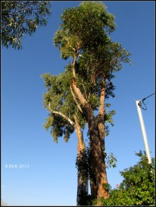 tree_9