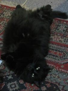 tummy scratch please_new camera_no flash_april2011