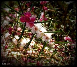 wildflower_1