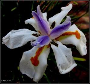 street flowers_1