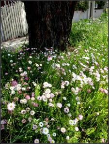street flowers_5