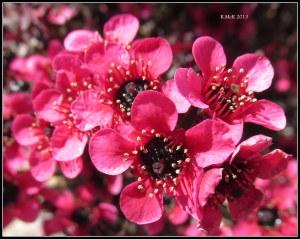 flowers_12