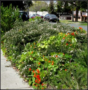 street garden_2