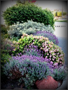 street garden_3