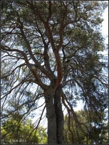 trees_10