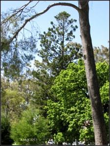 trees_11