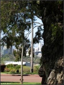 trees_13