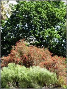 trees_15