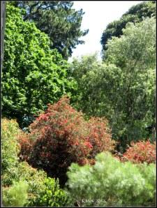 trees_16