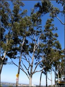trees_19