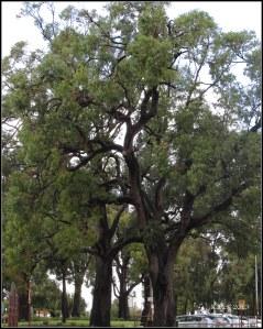 trees_2