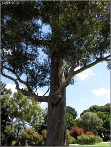 trees_20