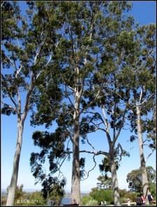 trees_22