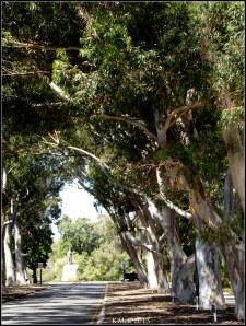 trees_23