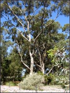 trees_24