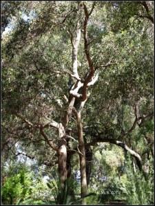 trees_25