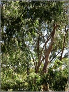 trees_26