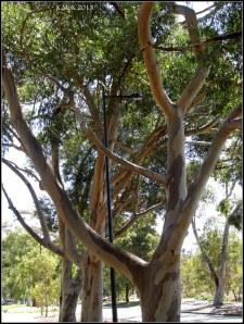 trees_27
