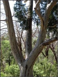 trees_28