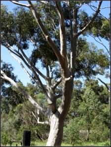 trees_29