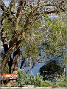 trees_30
