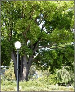 trees_31