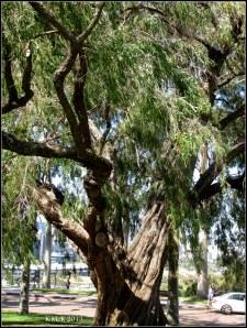 trees_32