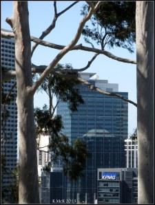 trees_33